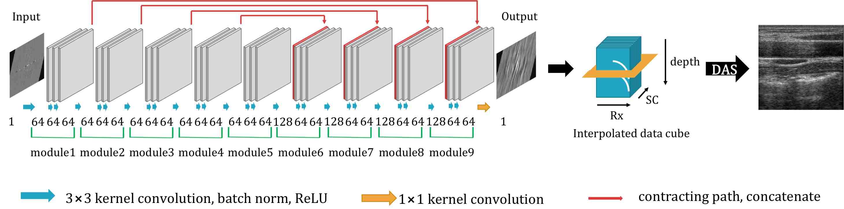 Deep Learning in RF Sub-sampled B-mode Ultrasound Imaging